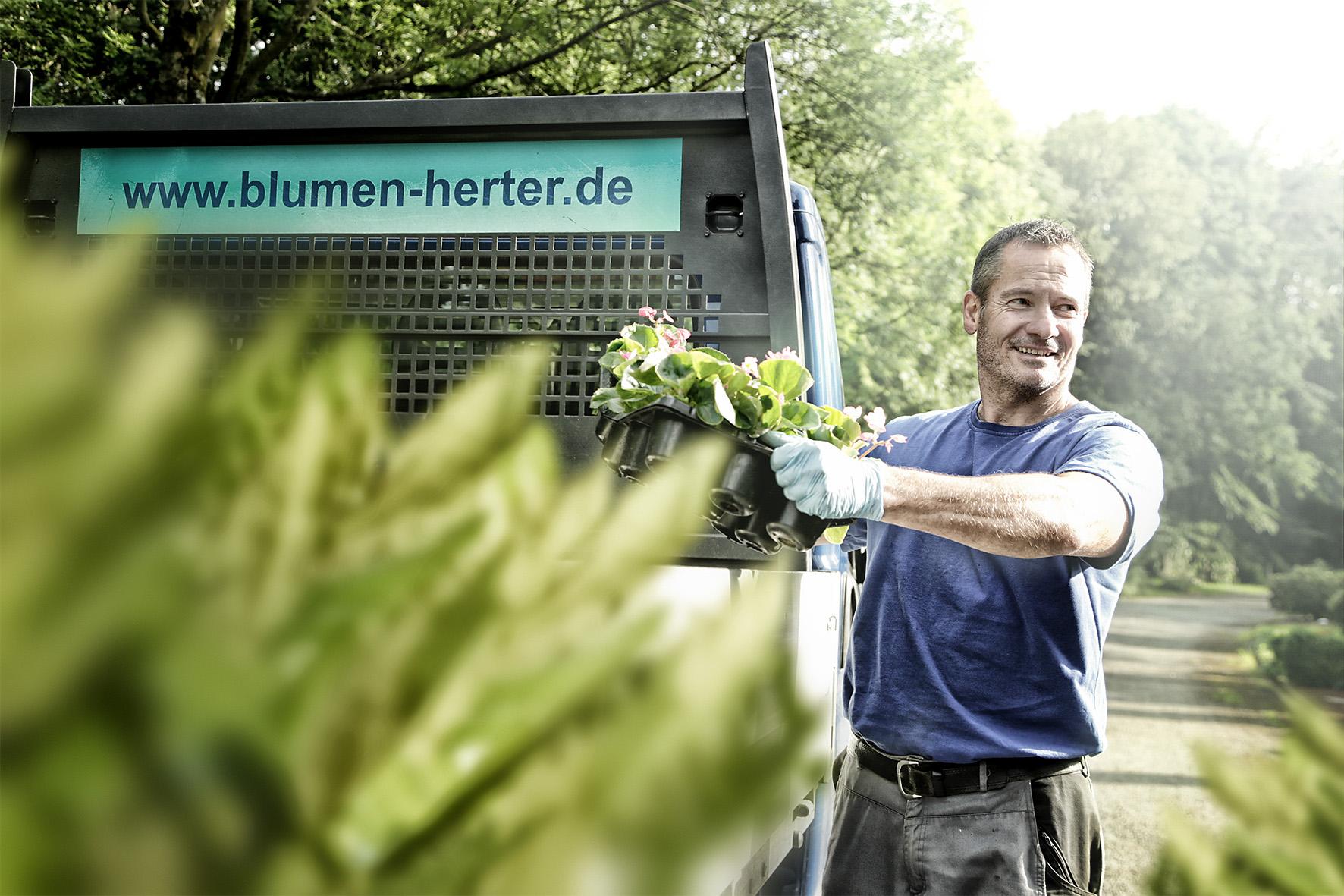 Blumen Herter